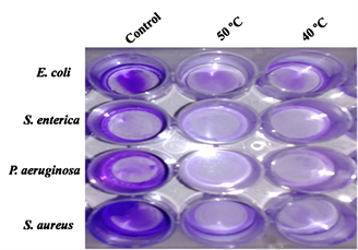 Bacterial Biofilm Degradation Using Extracellular Enzymes Produced