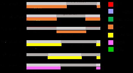ibrahimo yilmazo dvejetainiai variantai