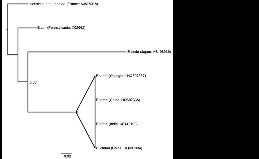 molecular characterization of glyceraldehyde 3 phosphate