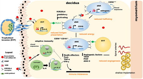 A Review Molecular Concepts and Common Pathways Involving
